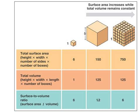 maker it s time for an ambush volume 1 books explain the relationship between cell size and quot surface
