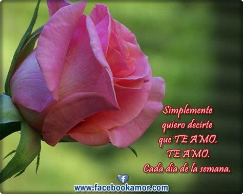 Lindas flores de rosa con frases romanticas para amor png