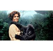 Dian Fossey  Gorillas In The Mist