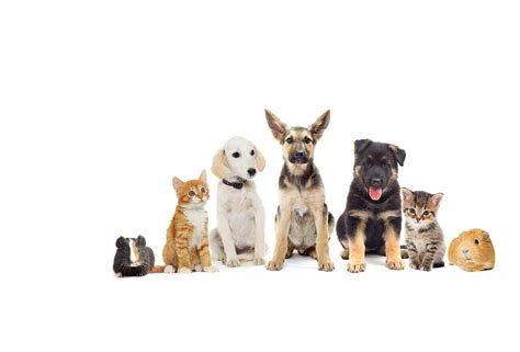 about pet national pet month promoting responsible pet ownership across the uk