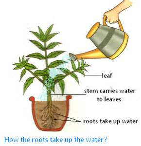 what plants can do for us where do plants get their