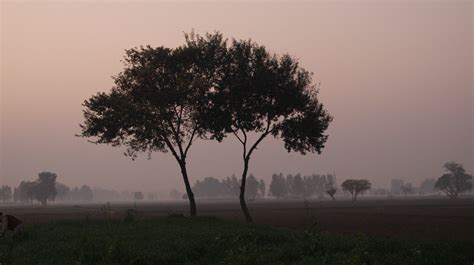 pictures of trees file evening rukhala two trees jpg wikimedia commons