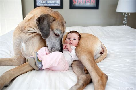 dogs and babies 22 and their big dogs bored panda