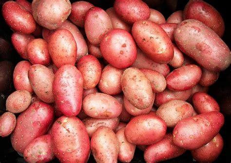 Alte Kartoffelsorten Kaufen 2298 by Saatkartoffeln Selber Ziehen Pflanzkartoffeln
