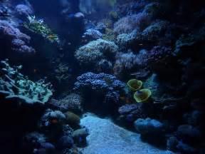 25  Aquarium Backgrounds   Wallpapers   FreeCreatives
