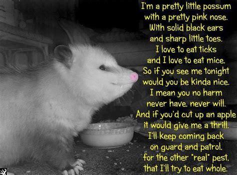 Possum Memes - 1000 images about opossum possum on pinterest