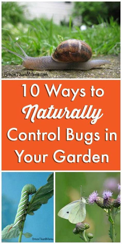how to get rid of backyard bugs pinterest the world s catalog of ideas