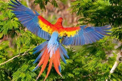 las aves exticas mi 8408127950 aves ex 211 ticas informaci 243 n y consejos de todas las especies