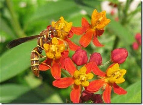 Caterpillar Predator elizabeth s secret garden caterpillar predators and diseases