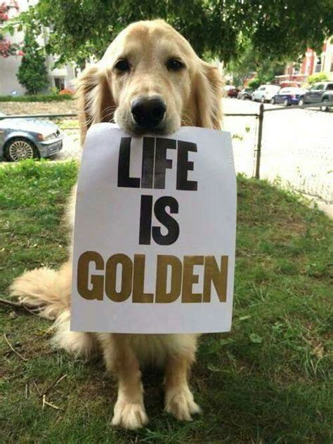 best bones for golden retriever puppies 4822 best simple happy that s what i would like to live tak chciałabym