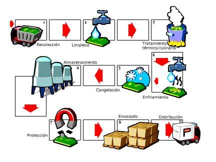 cadena productiva vitivinicola a proceso productivo definici 243 n