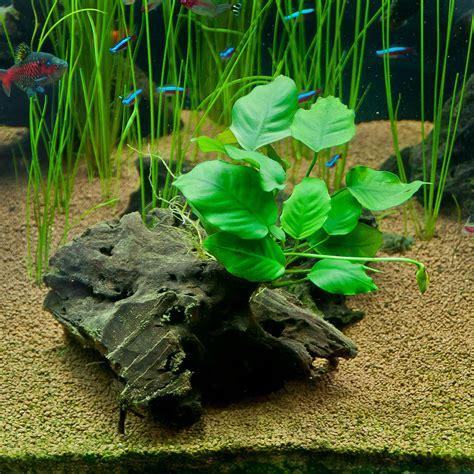 tanaman  hidup  air beserta gambarnya