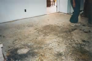 Can Mold Grow Under Carpet Examples Home Mold Contamination