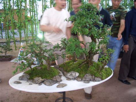 bonsai masterclass all you japanese garden photo gallery pecenp international