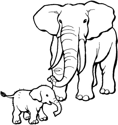 elephant ears coloring page adorable creature baby elephant 18 baby elephant coloring