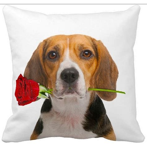 ileesh beagle with a 16 inch throw pillow valentines