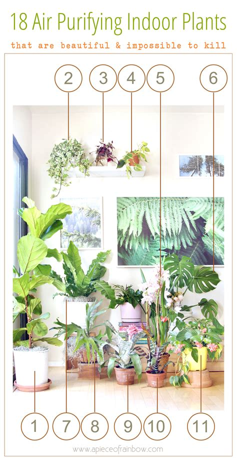 top houseplants for low medium and high light conditions best low light houseplants