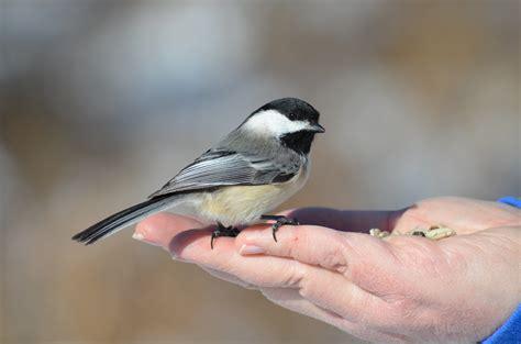 bird feeding colmel s blog