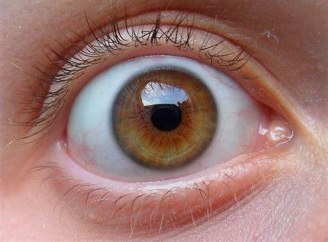 hazel color seagreen on my hazel contact lenses forum lens