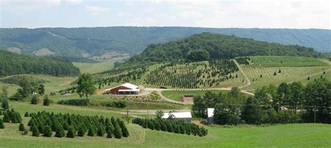 piper mountain christmas tree farm for sale virginia tree farms virginia is for