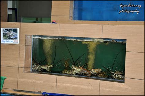 Jual Bibit Lobster Air Tawar Murah harga lobster per gram lobster house