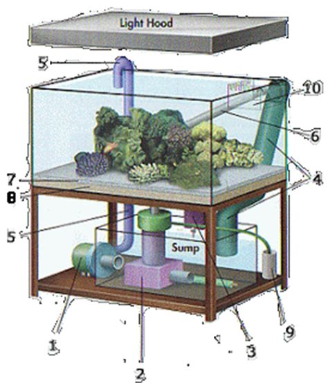 Termometer Air Laut d aquarium setup akuarium laut
