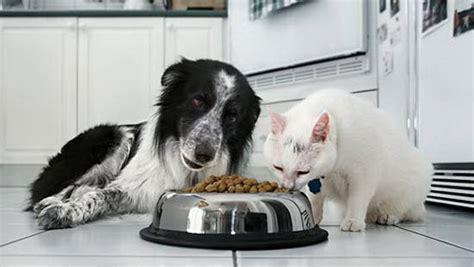 veterinaria alimenti veterinaria la farmacia dello sportivo