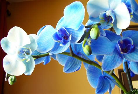 orchid blue water reflection flowers beautiful orchid how to care for orchids flower inspirationseek