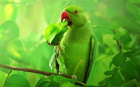 las aves exticas mi las aves mas exoticas