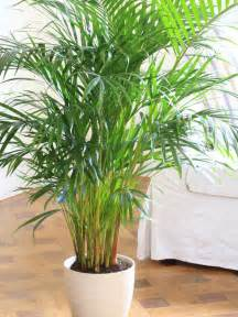 Best Plants For Office With No Windows Ideas Las 17 Mejores Plantas De Interior