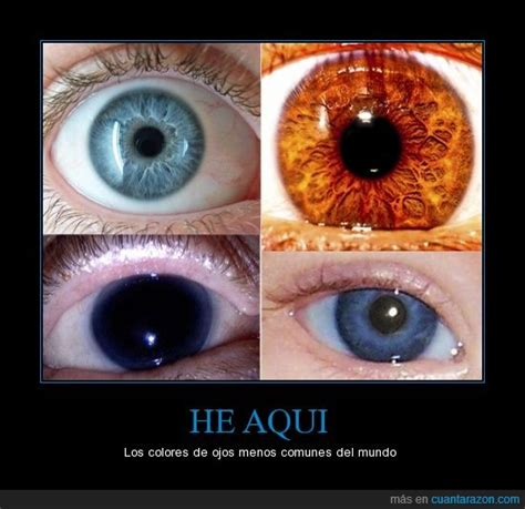 imagenes de ojos naranjas 161 cu 225 nta raz 243 n los colores de ojos m 225 s extra 241 os
