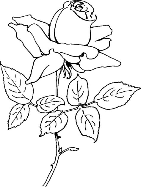 coloring pages of roses coloring pages