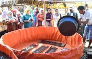 Pakan Ikan Lele Bioflok cara budidaya lele bioflok produksi maksimal
