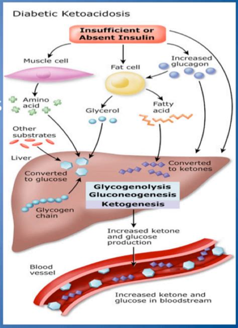 carbohydrates definition quizlet new definition of glycogenolysis glycogen