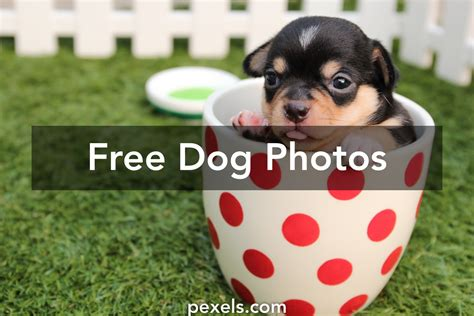 free puppy listings images 183 pexels 183 free stock photos