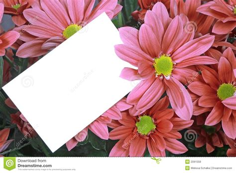 Free Pink Gift Cards - gift card and pink flowers royalty free stock photos image 2091558