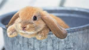 Rspca Rabbit Hutch Rabbit Care Berwick Springs Veterinary Hospital