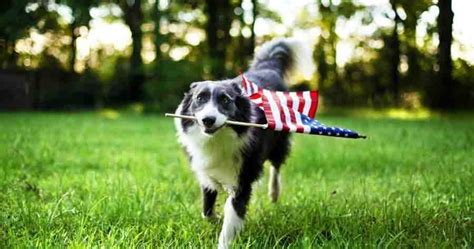 most popular breeds 2016 2016 s most popular breeds in america wide open pets