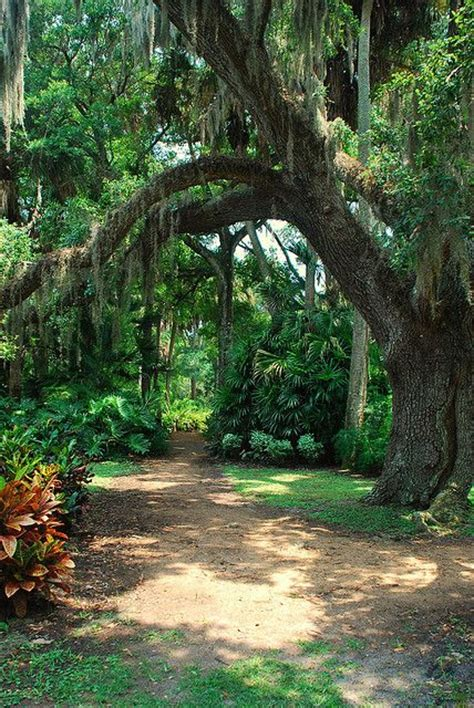 Gardens State Park by Washington Oaks Gardens State Park Beautiful Places