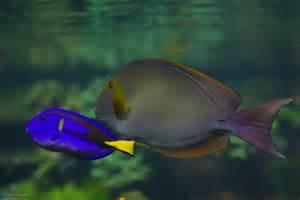 schwimmbad mit aquarium fisch aquarium zoo tierpark wasser schwimmen freunde meer