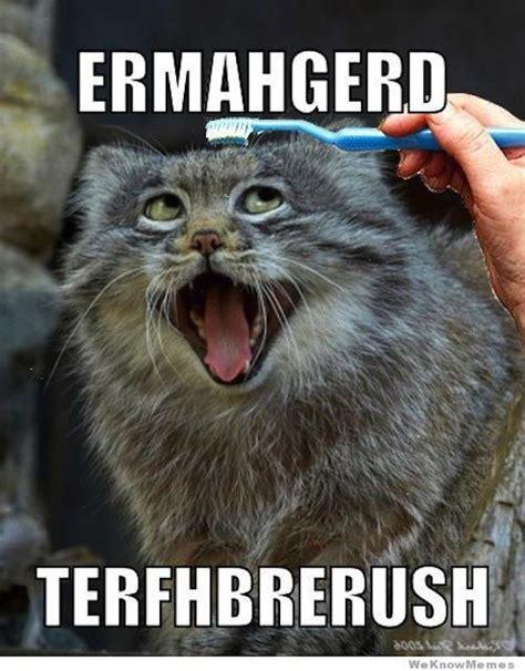 Toothbrush Meme - 20 derpiest ermahgerds smosh