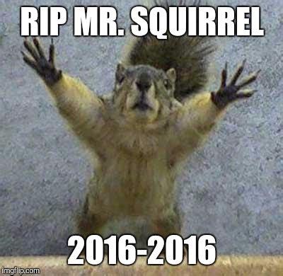 shlick meme terrified squirrel imgflip
