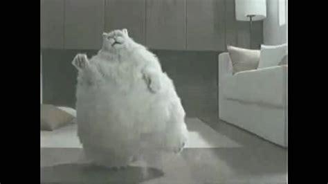 Decke Katze by Fette Katze Beim Abnehmen