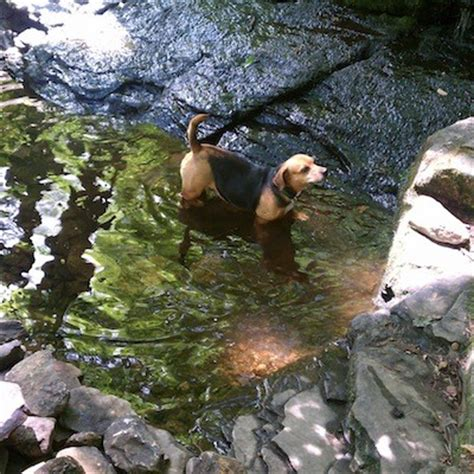 trout brook reservation holden ma golocalworcester great hikes in central mass to take