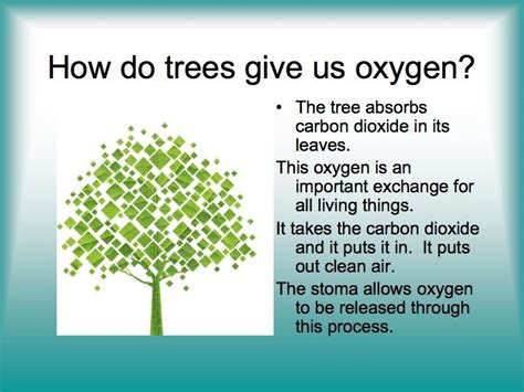 How Many Trees Does It Take To Make Paper - planting trees how do trees make oxygen