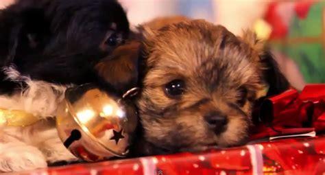 imagenes de animales navidad los animales no son un juguete para regalar por navidad