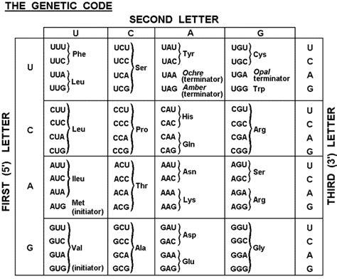 Genetic Code Table by Omara Genetic Code Table