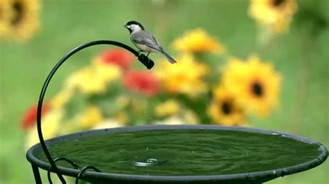 diy bird bath dripper bird cages