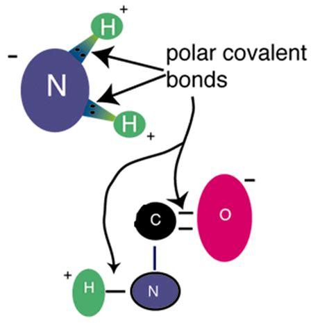 opinions on polar covalent bond