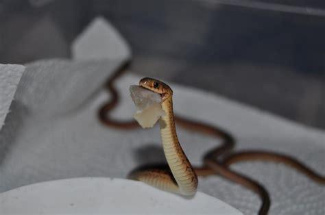 Garter Snake Meme Babies Snakes Garter Snakes Heirofcondo